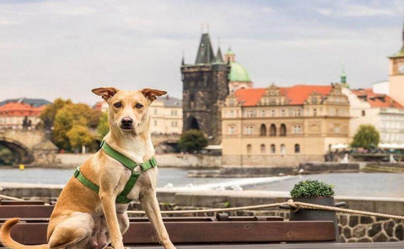Путешественники рискнули и увезли больного щенка из Индии, столкнувшись с множеством трудностей. Но позже собака изменила их жизнь
