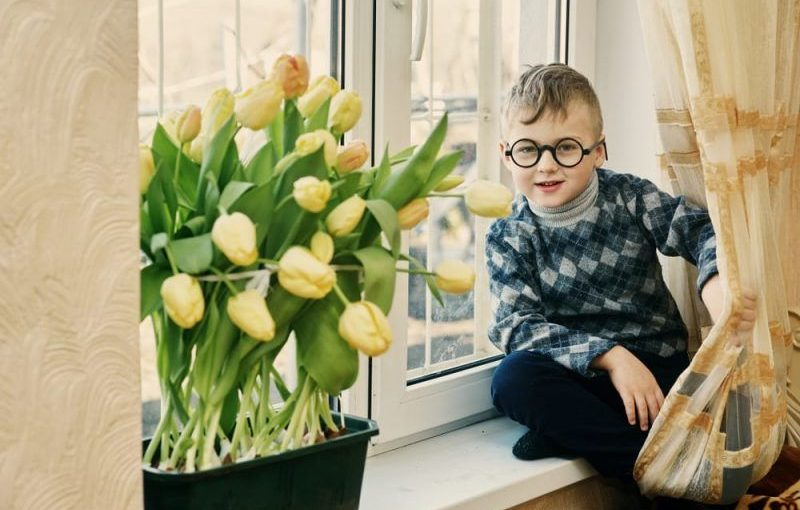 Выращиваем тюльпаны на подоконнике без использования грунта!