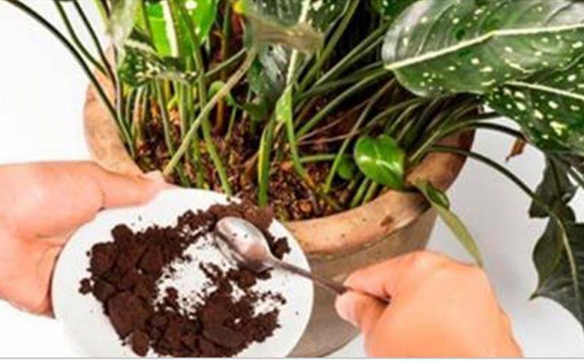 7 натуральных удобрений для комнатных растений, которые обеспечат им обильное цветение и рост
