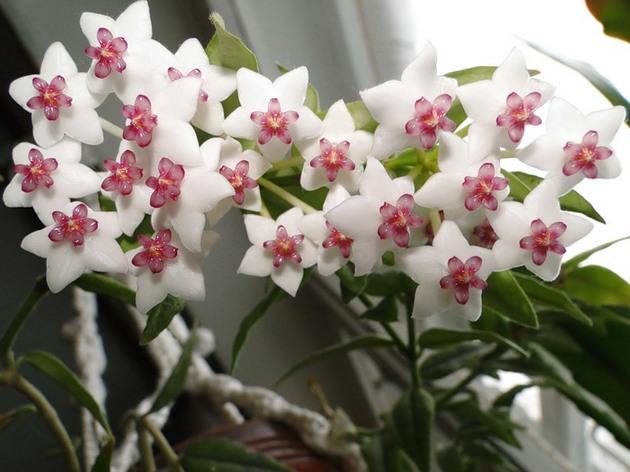 Цветы, которые приносят счастье в дом.