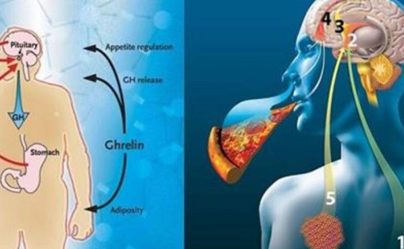 Как приручить гормон голода грелин: 10 маленьких хитростей