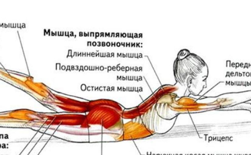 Омолаживающие упражнения для спины