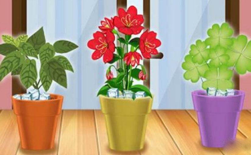Простой трюк, благодаря которому больше ни одно растение в доме не погибнет