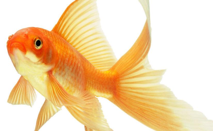 Тест: когда золотая рыбка исполнит вашу мечту