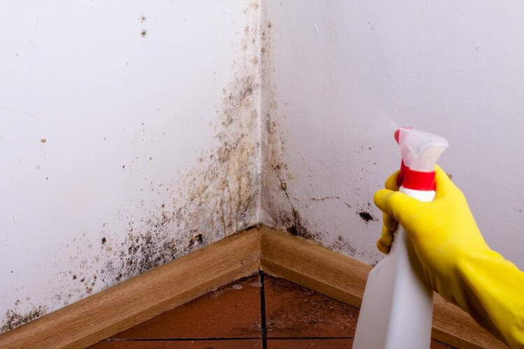 15 признаков того, что в доме появилась плесень