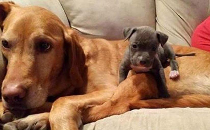 Безумно трогательные фото выросших вместе животных-друзей