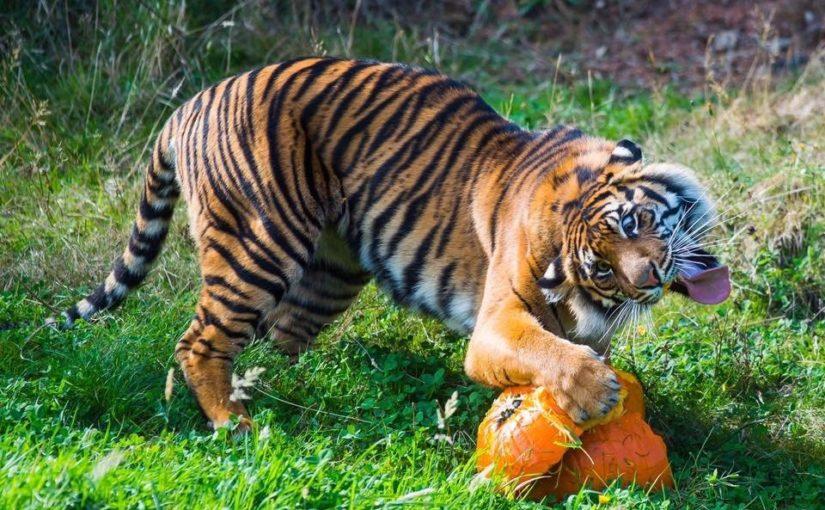 20 животных, которые хотели бы, чтобы их фото срочно удалили из интернета