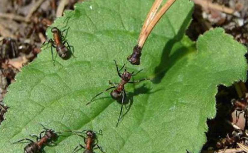 Как легко и надолго избавиться от муравьев на садовом участке