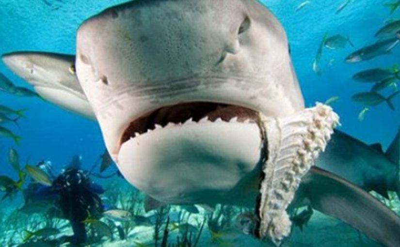 Врагом акул являются дельфины.