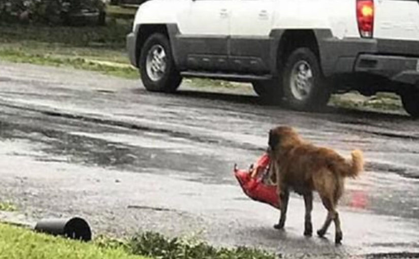 Собака спасла жизнь новорождённому.