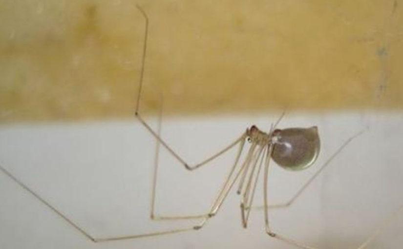 Убивать пауков — плохая примета.