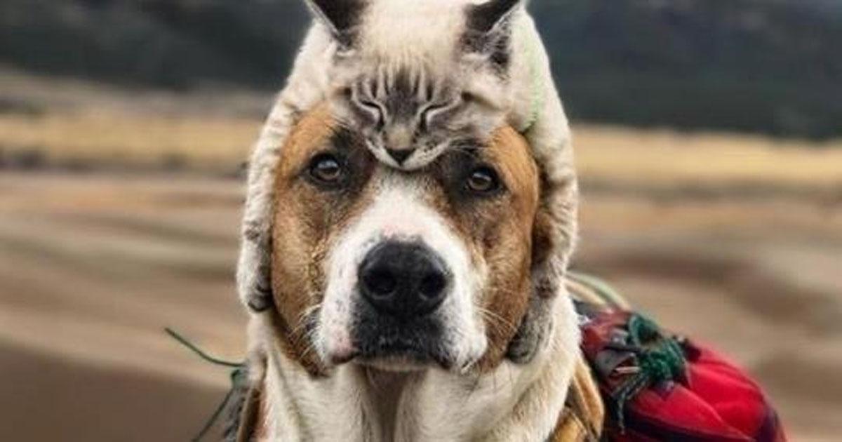 Очень крутые фотографии друзей-путешественников — пса и кота. И их хозяйки