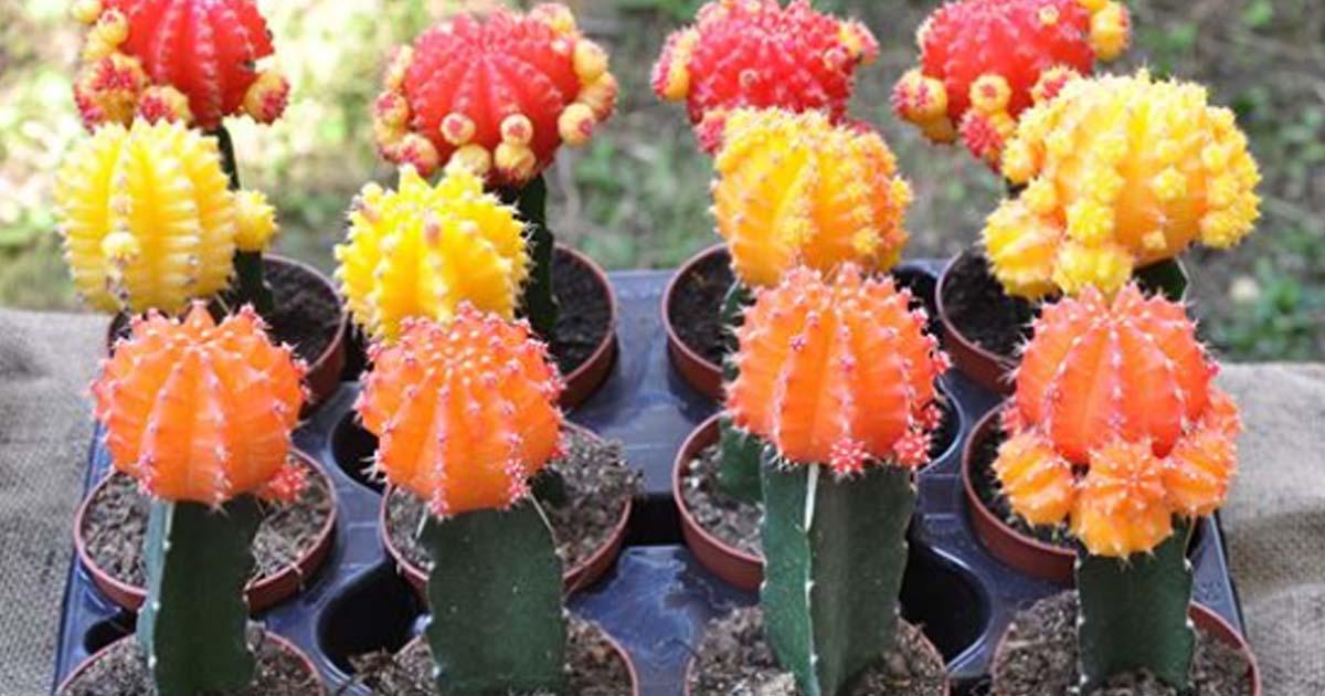 Как вырастить кактус с нуля. Полезные советы