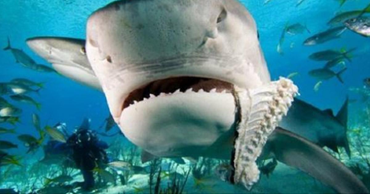 Почему акулы боятся дельфинов.