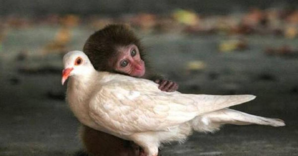 35 прекрасных кадров необычной дружбы среди животных
