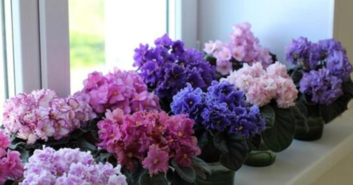 Как заставить растения цвести пышным цветом