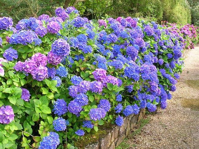 ТОП 15 самых опасных цветов в мире