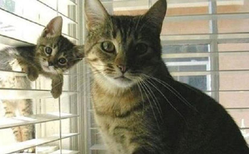 10 самых милых фото кошек с котятами