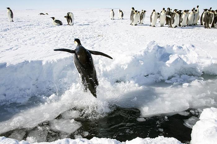 20 фактов об Антарктиде, которые на 100% правдивы