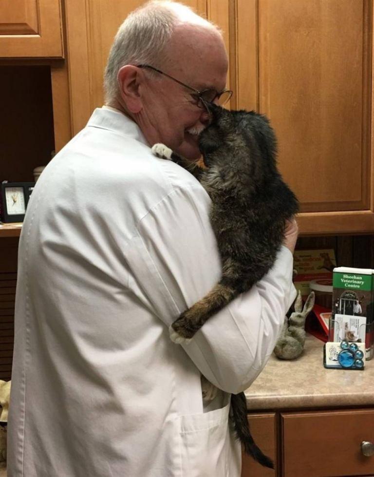 15-летний бродячий кот наконец дождался «своего человека», который забрал его домой