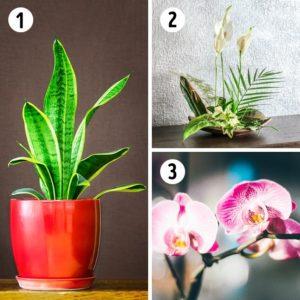 15 лучших растений для каждой комнаты в доме