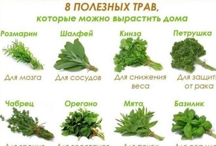 8 полезных трав, которые можно вырастить дома