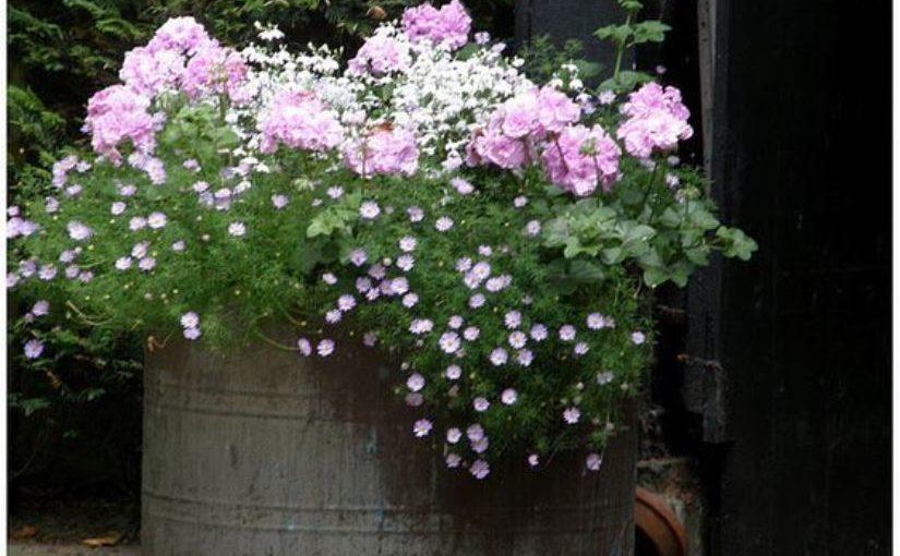Висячие сады или сад в горшке — очаровательные идеи для участка