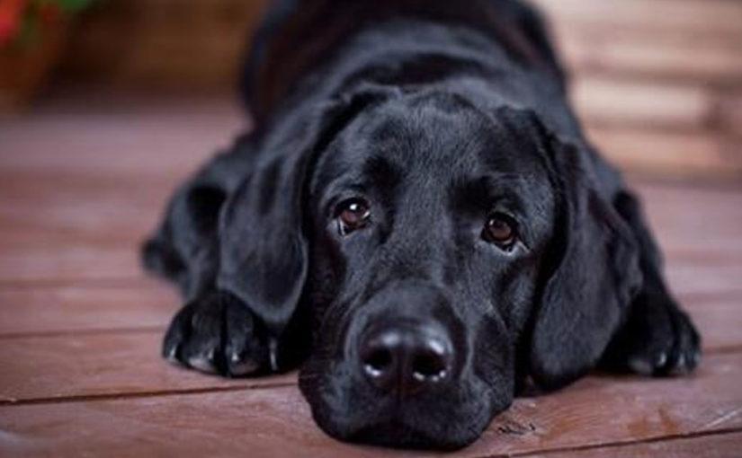 Рейтинг топ-10 самых умных пород собак