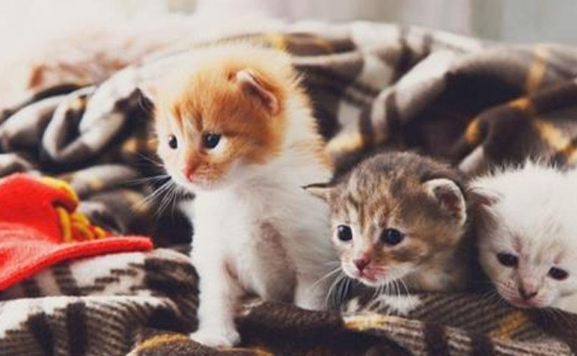 Почему кошки мурлыкают и другие факты кошачьи жизни