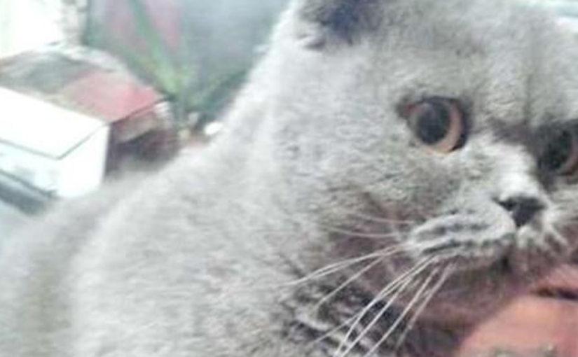 О любимцах: семья решила избавиться от здоровой молодой кошки