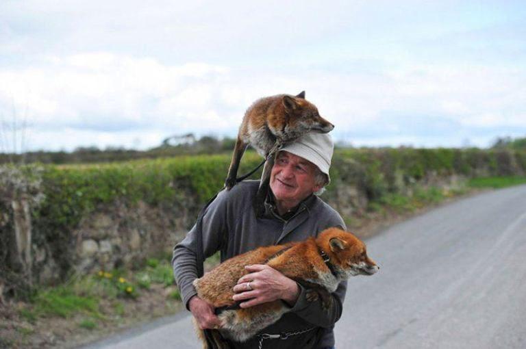 История о мужчине, который спас двух лис