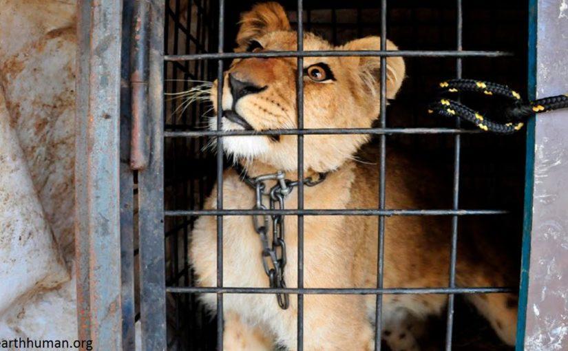 В Украине запретят диких животных в цирках