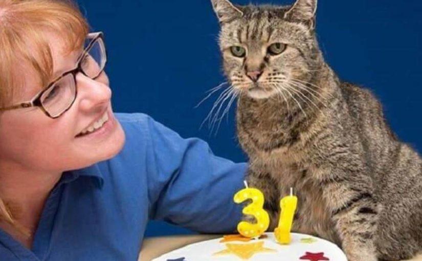 Статья о старейшем коте в мире, которому исполнился 31 год