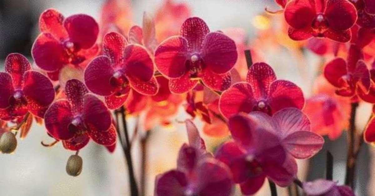Подборка примет про орхидею в доме