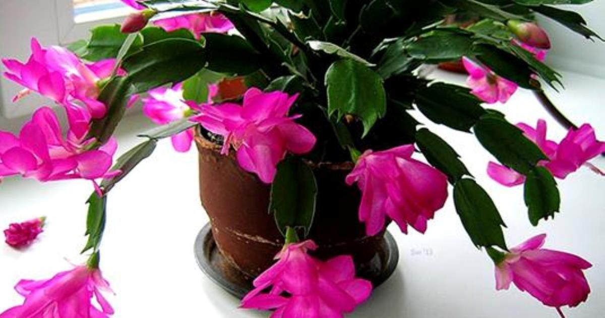 9 растений, которые стоит поставить в спальне