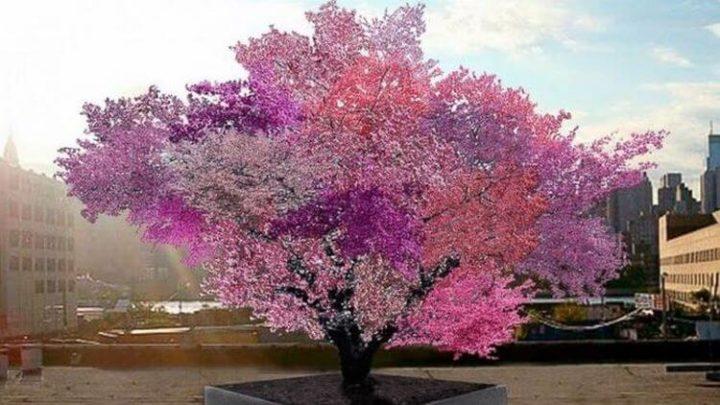 Удивительное дерево, на котором одновременно растёт 40 видов фруктов