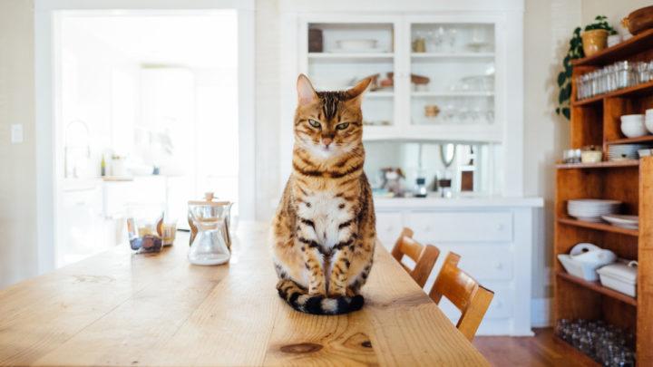 12 популярных мифов о кошках