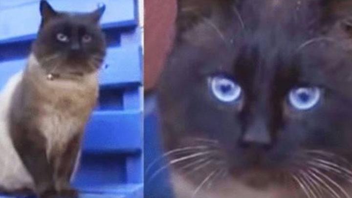 Видео о коте, которого бросили на остановке, а тот сидит и верно ждёт что за ним вернутся