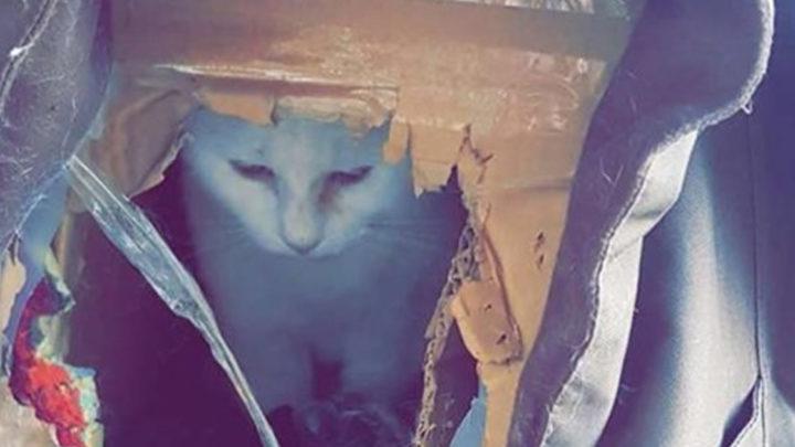 История о кошке, которой пришлось жить в картонной коробке и о её спасении