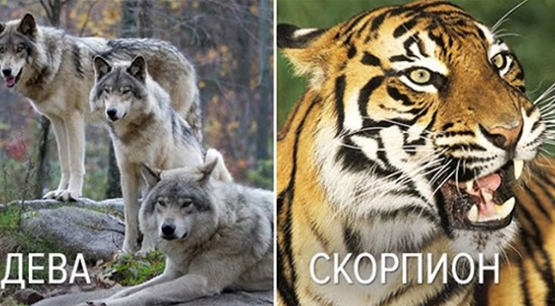Хищные животные, с которыми можно сравнить женщин разных знаков Зодиака