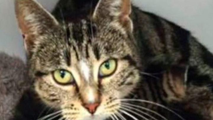 История о кошке, у которой отобрали котят, но она нашла их на другом конце города