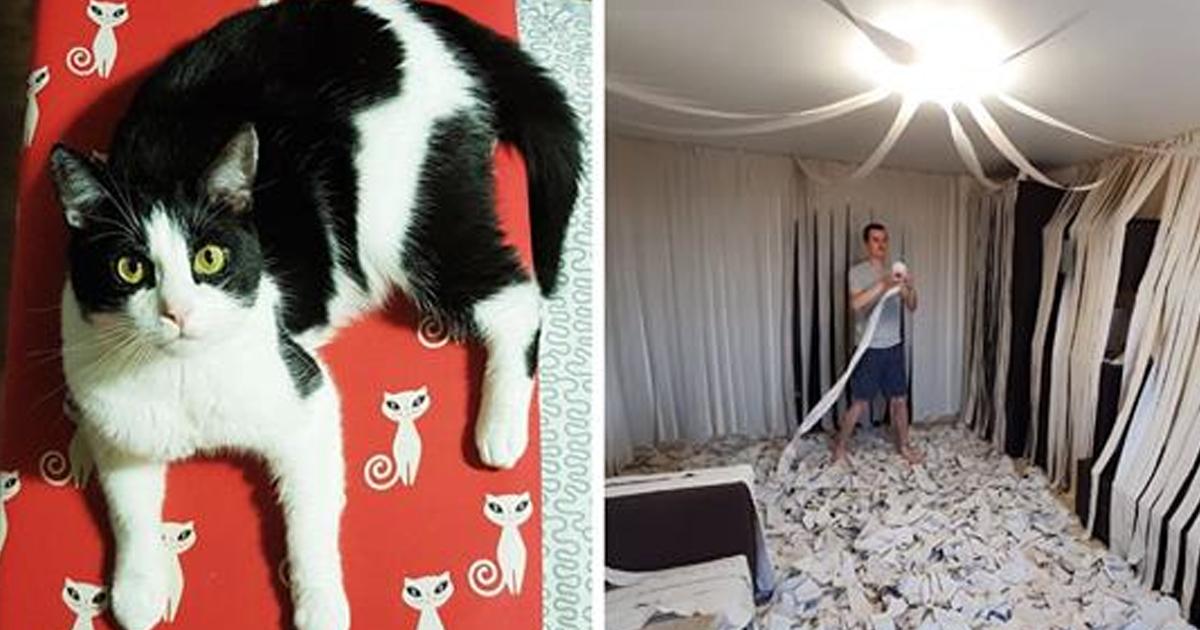 Хозяева сделали коту игровую из 100 рулонов туалетной бумаги — видео восторга кота