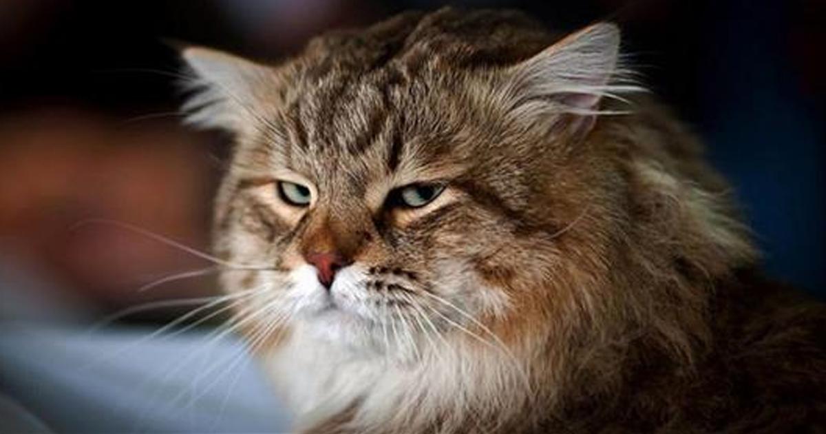 Лайфхак, как занять кота на целый день