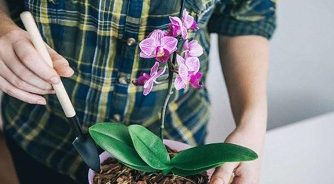 Необычный полив для орхидей